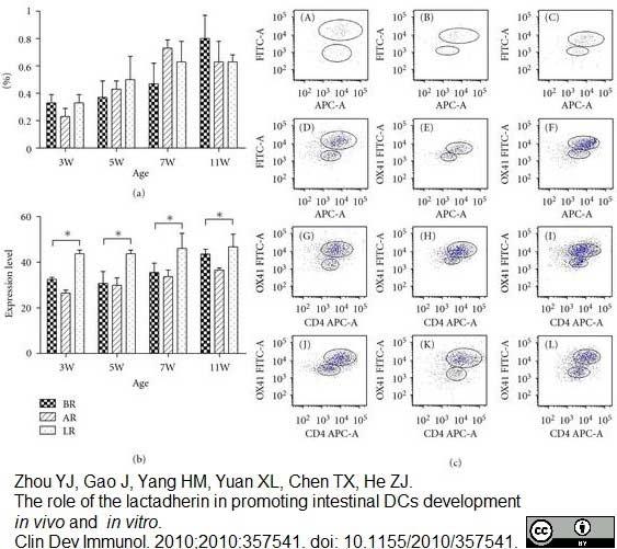 Anti Rat CD172a Antibody, clone OX-41 thumbnail image 1