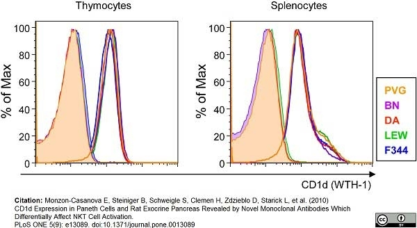 Anti Rat CD1d Antibody, clone WTH1 thumbnail image 2
