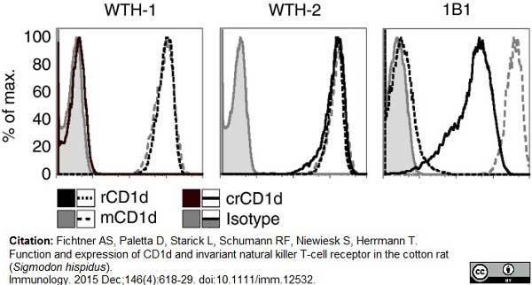 Anti Rat CD1d Antibody, clone WTH1 thumbnail image 7