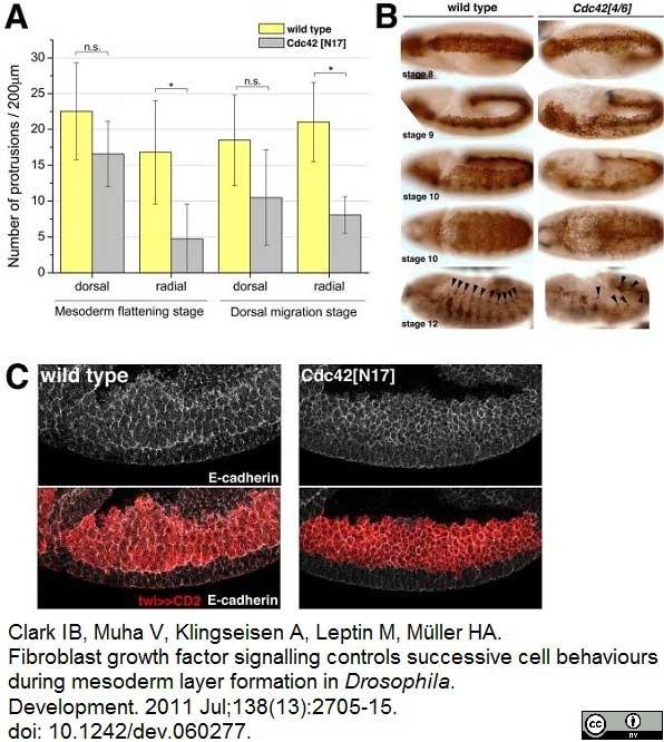 Anti Rat CD2 Antibody, clone OX-34 thumbnail image 7