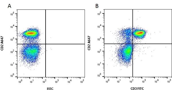 Anti Rat CD3 Antibody, clone 1F4 thumbnail image 1