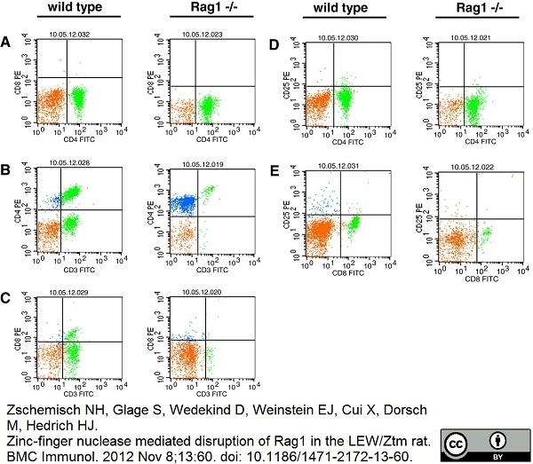 Anti Rat CD3:FITC/CD4:RPE, clone IF4 : W3/25 thumbnail image 2