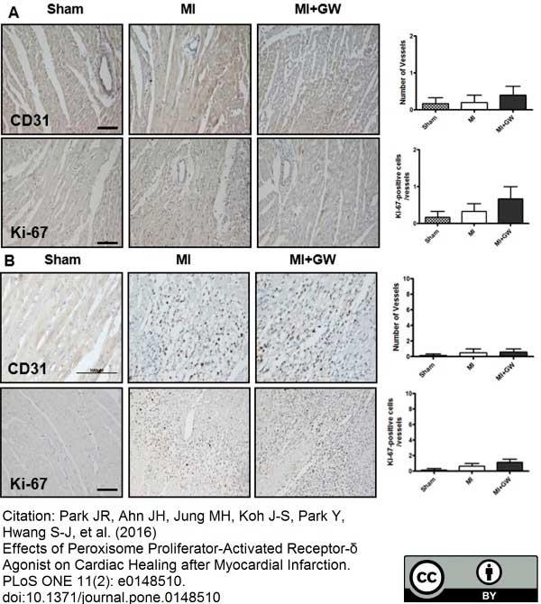 Anti Rat CD31 Antibody, clone TLD-3A12 thumbnail image 10