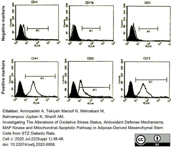 Anti Rat CD31 Antibody, clone TLD-3A12 thumbnail image 14