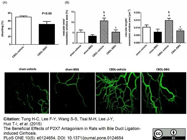 Anti Rat CD31 Antibody, clone TLD-3A12 thumbnail image 7