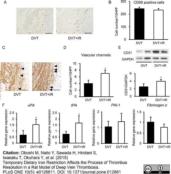 Anti Rat CD31 Antibody, clone TLD-3A12 thumbnail image 8