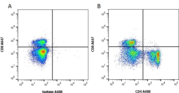 Anti Rat CD4 (Domain 1) Antibody, clone W3/25 thumbnail image 1