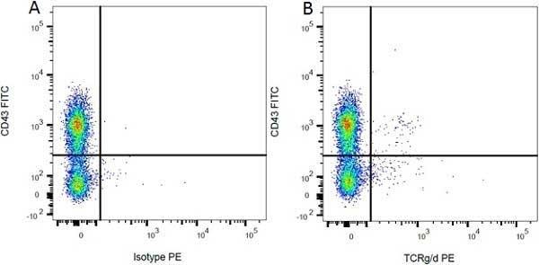 Anti Rat CD43 Antibody, clone W3/13 thumbnail image 3