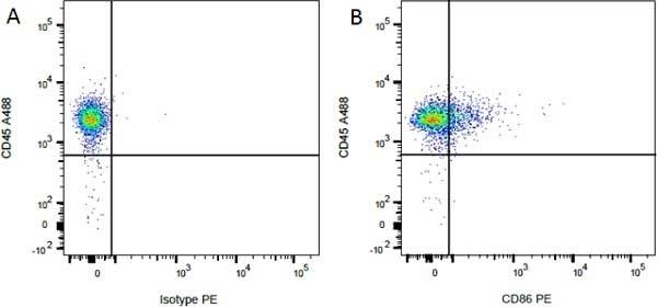 Anti Rat CD45 Antibody, clone OX-1 thumbnail image 3