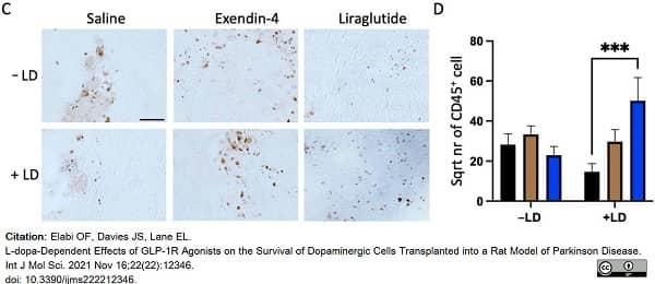 Anti Rat CD45 Antibody, clone OX-1 thumbnail image 7