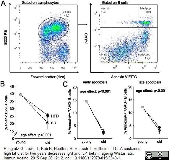 Anti Rat CD45RA (B Cells Only) Antibody, clone OX-33 thumbnail image 8