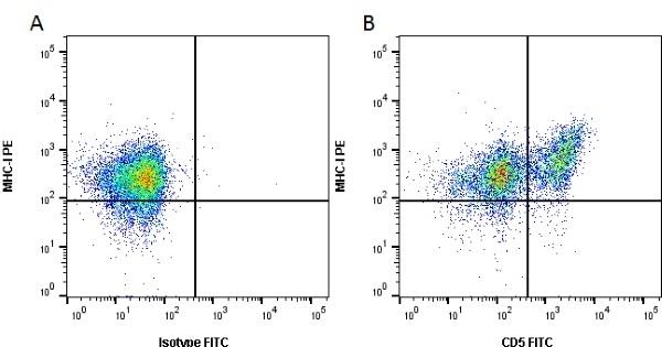 Anti Rat CD5 Antibody, clone OX-19 gallery image 1