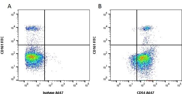 Anti Rat CD54 Antibody, clone 1A29 thumbnail image 1