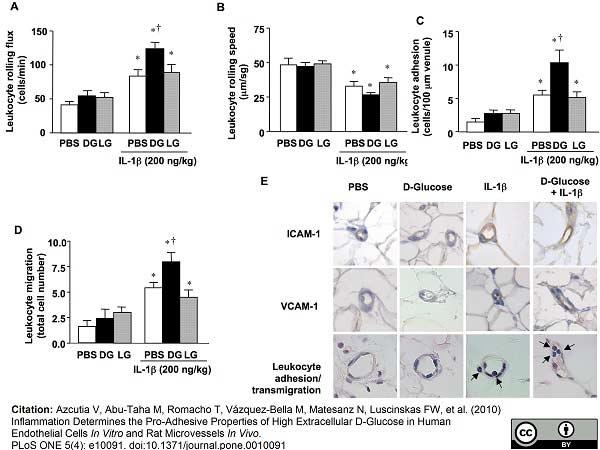 Anti Rat CD54 Antibody, clone 1A29 thumbnail image 3