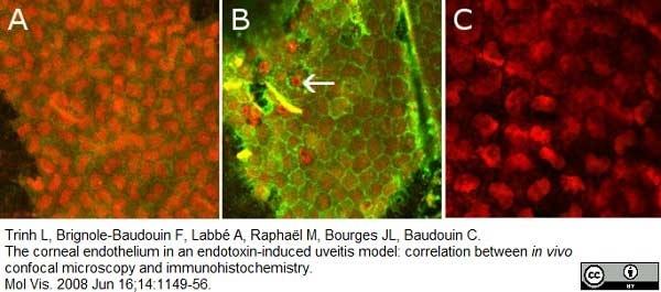 Anti Rat CD54 Antibody, clone 1A29 thumbnail image 4