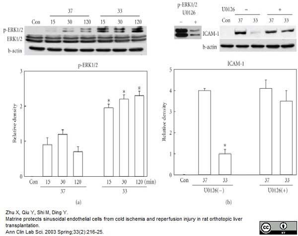 Anti Rat CD54 Antibody, clone 1A29 thumbnail image 5