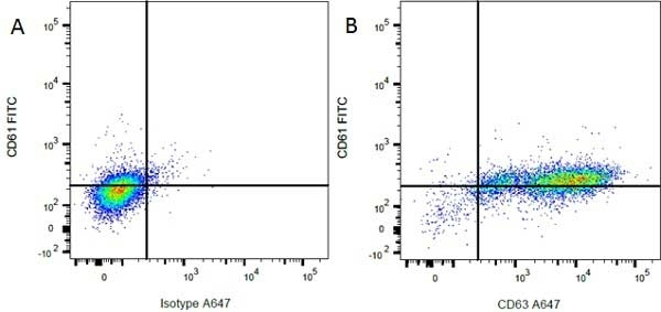 Anti Rat CD61 Antibody, clone F11 thumbnail image 2