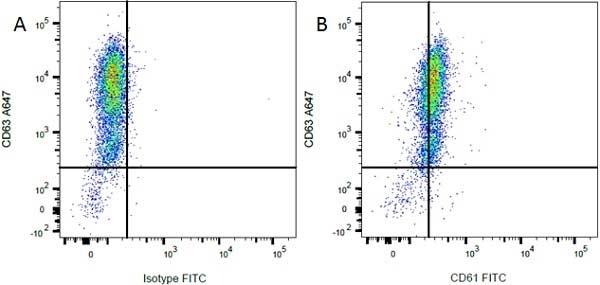 Anti Rat CD61 Antibody, clone F11 thumbnail image 3