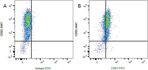 Anti Rat CD63 Antibody, clone AD1 thumbnail image 4