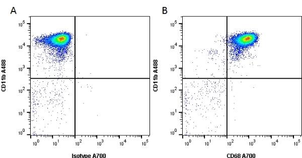 Anti Rat CD68 Antibody, clone ED1 thumbnail image 1