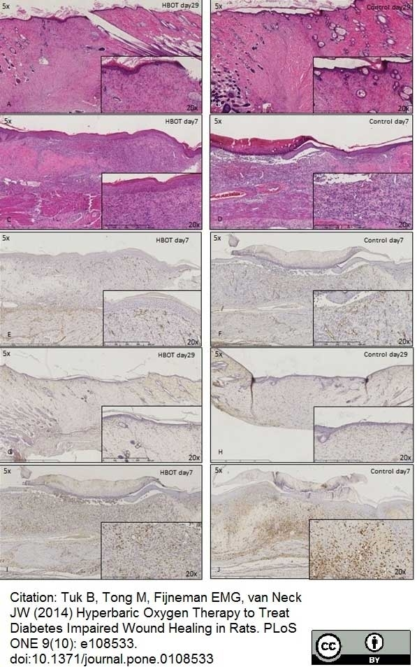 Anti Rat CD68 Antibody, clone ED1 thumbnail image 10
