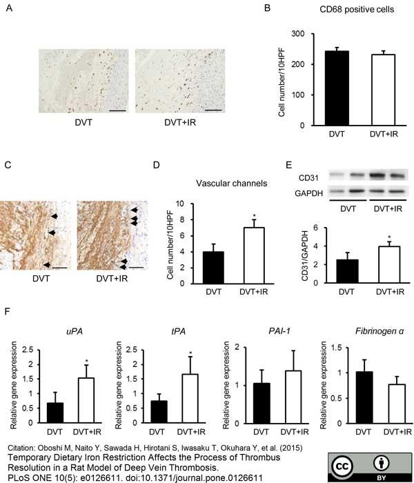 Anti Rat CD68 Antibody, clone ED1 thumbnail image 22