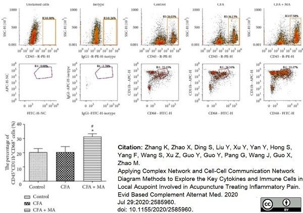 Anti Rat CD68 Antibody, clone ED1 thumbnail image 62