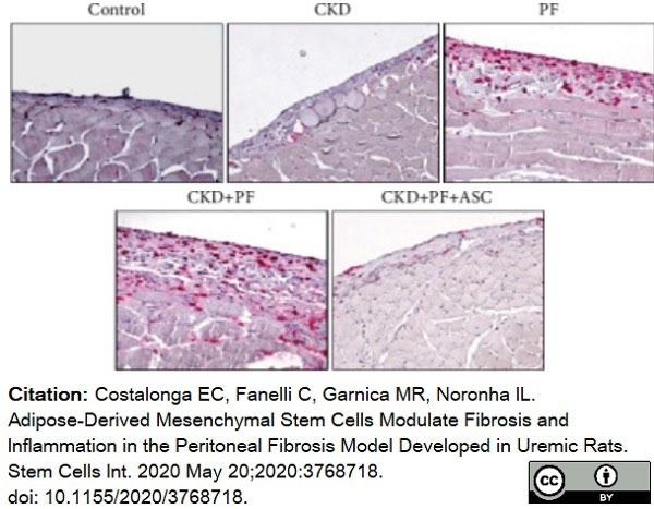 Anti Rat CD68 Antibody, clone ED1 thumbnail image 66