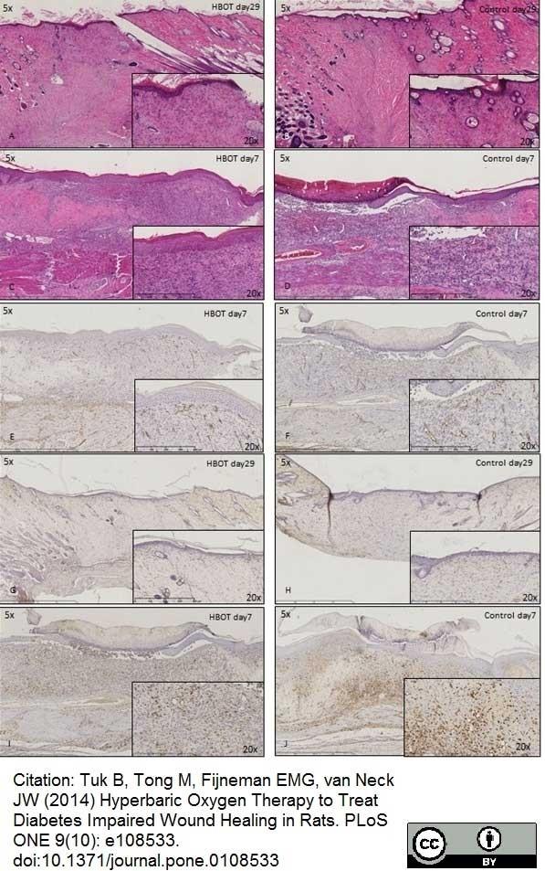 Anti Rat CD68 Antibody, clone ED1 thumbnail image 9