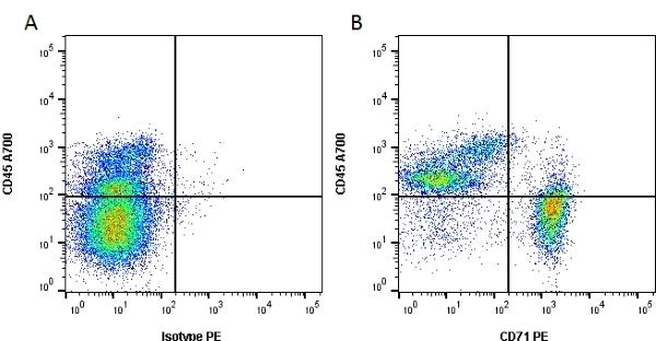 Anti Rat CD71 Antibody, clone OX-26 thumbnail image 1