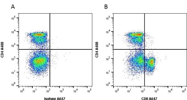Anti Rat CD8 Alpha Antibody, clone OX-8 thumbnail image 1