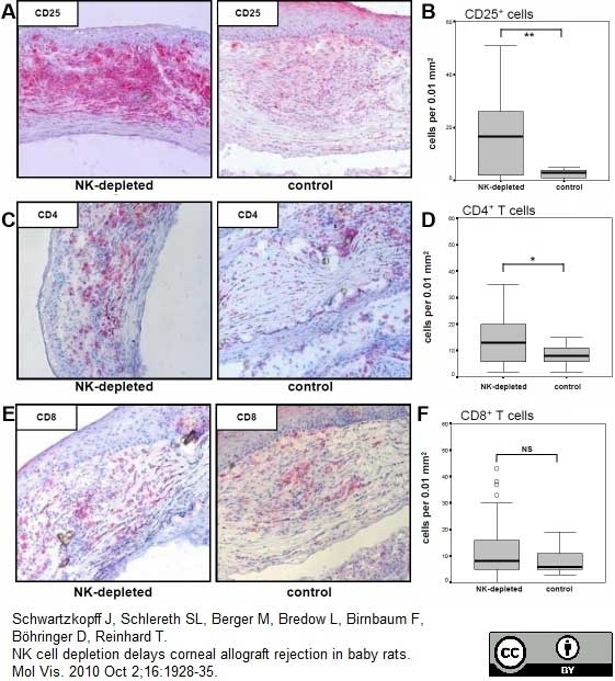 Anti Rat CD8 Alpha Antibody, clone OX-8 thumbnail image 5