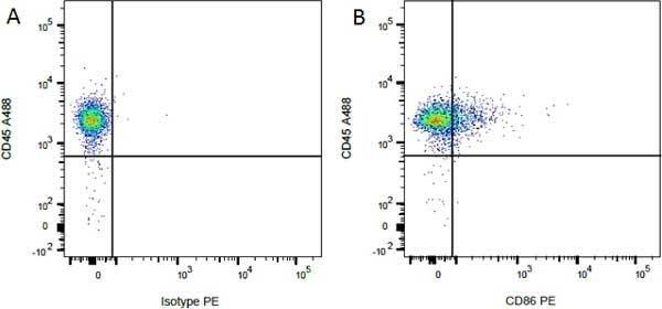 Anti Rat CD86 Antibody, clone 24F thumbnail image 2