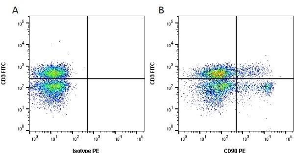 Anti Rat CD90 Antibody, clone OX-7 thumbnail image 1