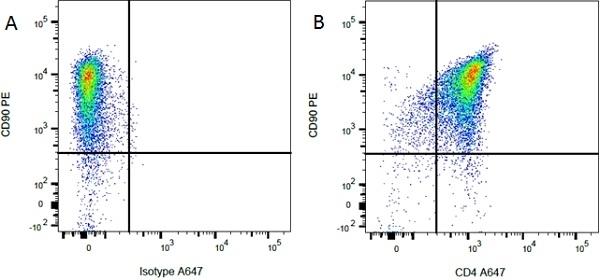 Anti Rat CD90 Antibody, clone OX-7 thumbnail image 3