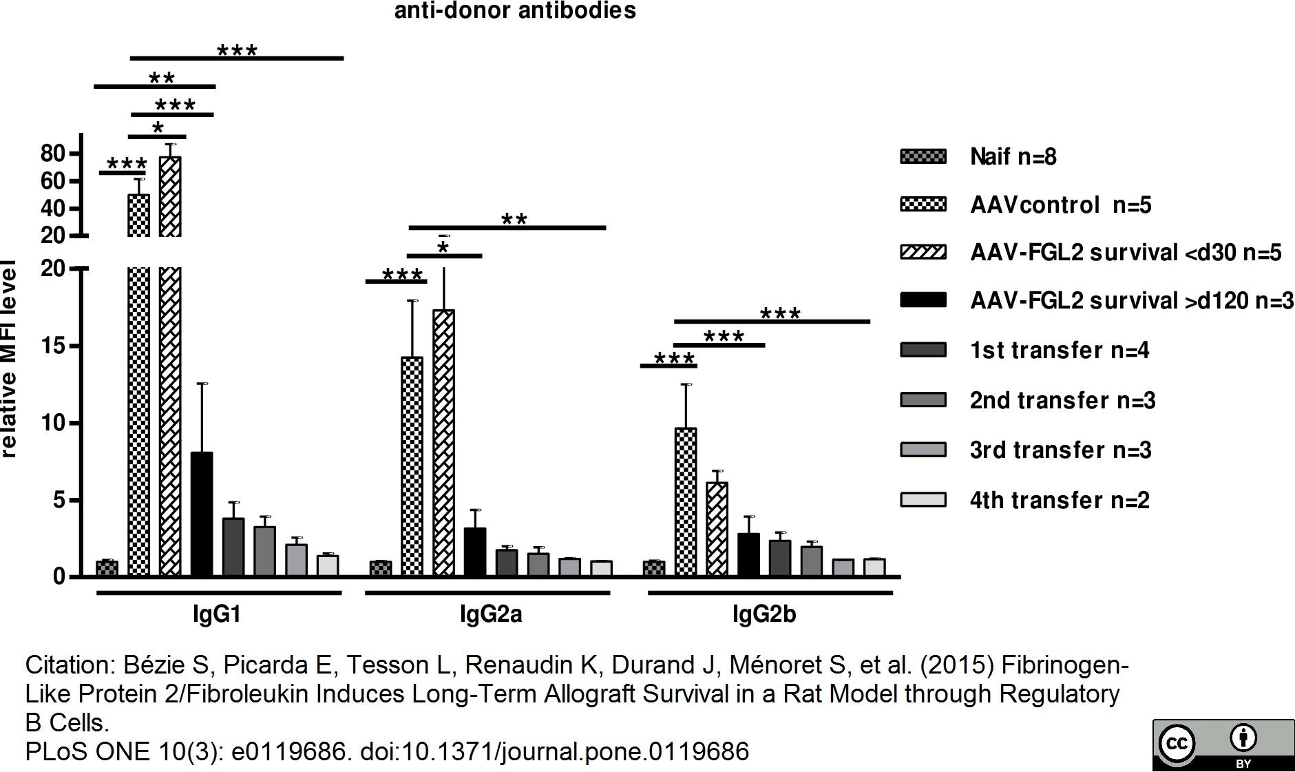 Anti Rat IgG2b Heavy Chain Antibody, clone MARG2b-8 gallery image 1