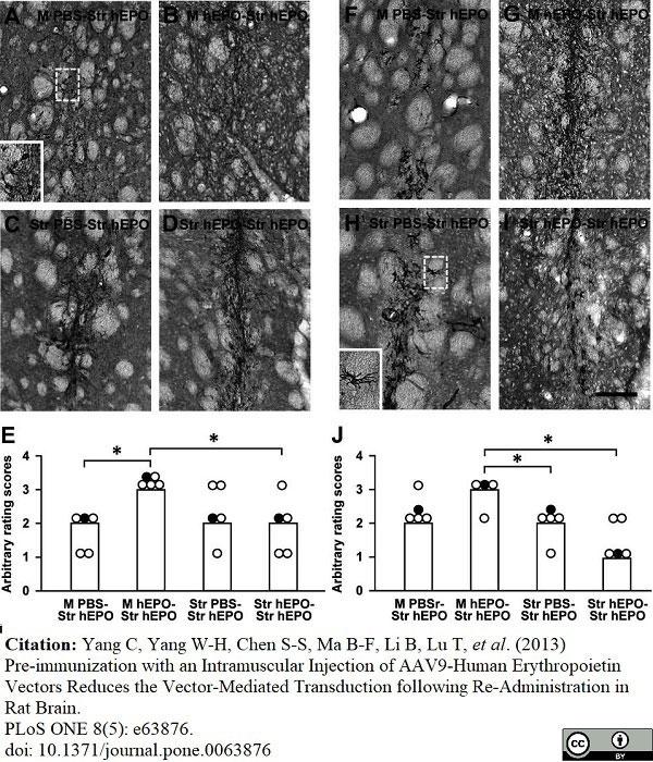 Anti Rat MHC Class I RT1A Antibody, clone OX-18 thumbnail image 6