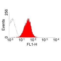 Anti Rat MHC Class I RT1Ac Antibody, clone OX-27 thumbnail image 1