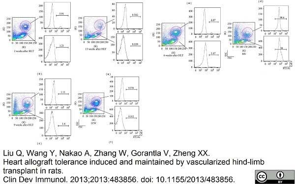 Anti Rat MHC Class I RT1Ac Antibody, clone OX-27 thumbnail image 4
