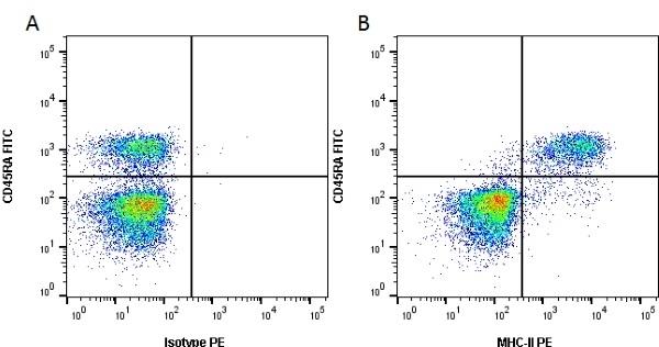 Anti MHC Class II H-2I-Ak/s Antibody, clone OX-6 thumbnail image 1
