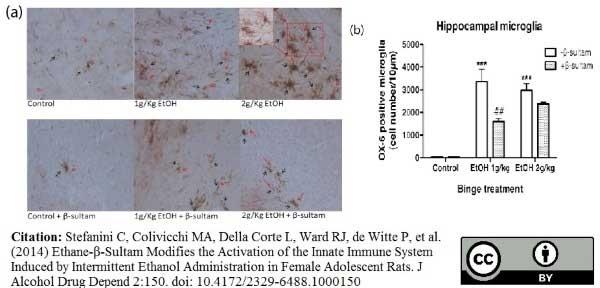 Anti MHC Class II H-2I-Ak/s Antibody, clone OX-6 thumbnail image 11
