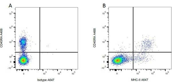 Anti MHC Class II H-2I-Ak/s Antibody, clone OX-6 thumbnail image 2