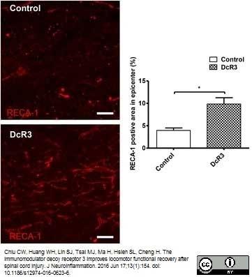 Anti Rat RECA-1 Antibody, clone HIS52 thumbnail image 19