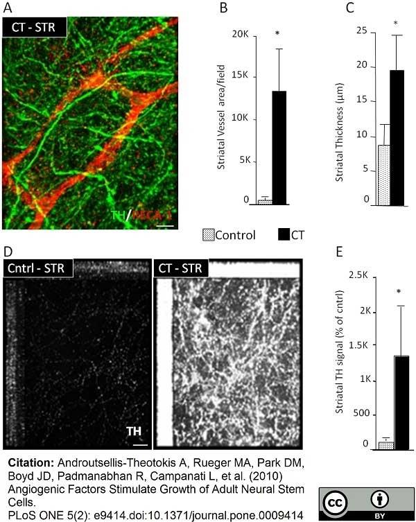Anti Rat RECA-1 Antibody, clone HIS52 thumbnail image 3