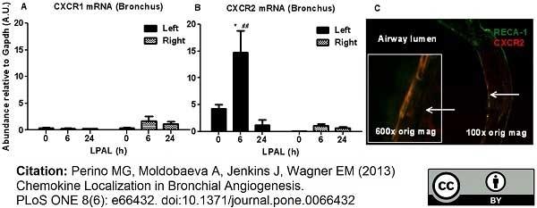 Anti Rat RECA-1 Antibody, clone HIS52 thumbnail image 5