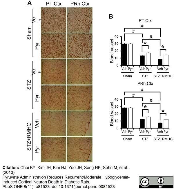 Anti Rat RECA-1 Antibody, clone HIS52 thumbnail image 6
