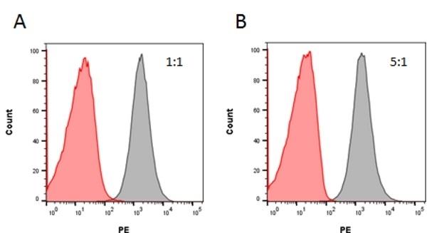 Anti Rituximab Antibody, clone AbD02842 gallery image 1