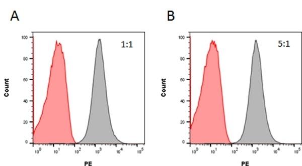 Anti Rituximab Antibody, clone AbD18423_hIgG1 thumbnail image 3