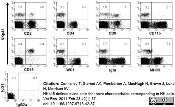 Anti Sheep CD335 Antibody, clone EC1.1 thumbnail image 7