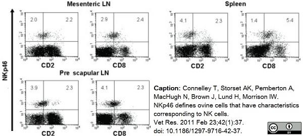 Anti Sheep CD335 Antibody, clone EC1.1 thumbnail image 8